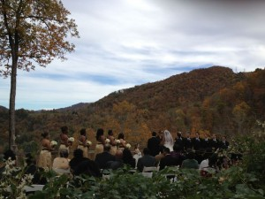 Weddings, Hair & Bears... Oh My! 1
